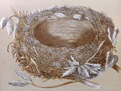 13th June 2019. Morris Nest & Egg Prints